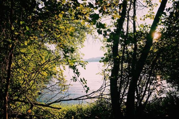 beautiful trout lake view